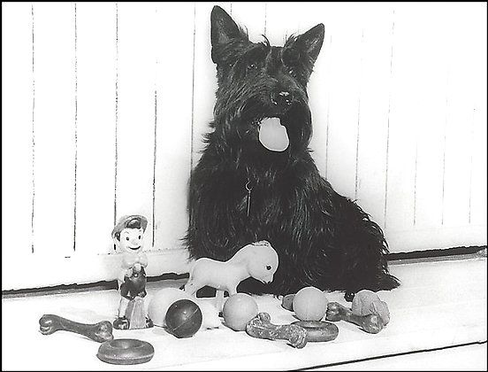 Roosevelt's Fala donates his rubber toys for the war effort.